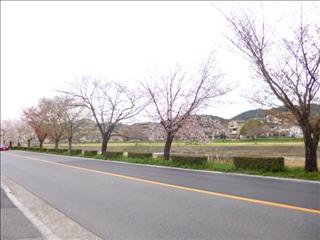 2014-04-03 さくら (1)_0