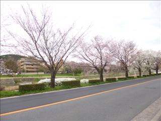 2014-04-03 さくら (2)_0