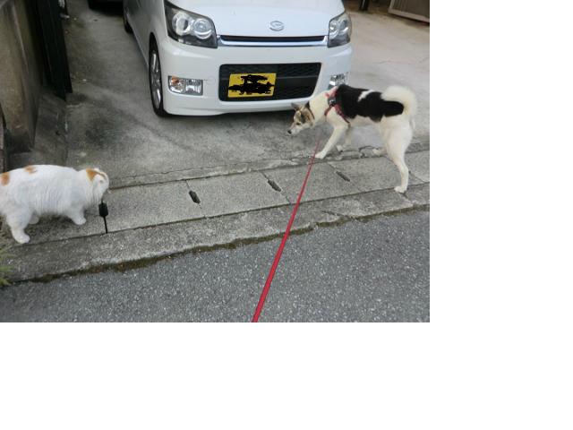 snap_sakuranbo32_201473215352.jpg
