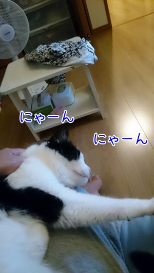 201478 (19)