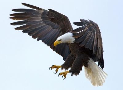 eagle4scj.jpg