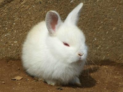 rabbit1-30.jpg