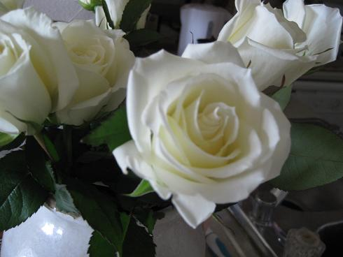 beautiful white roes