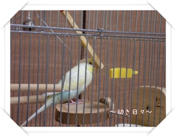 s-CIMG1367.jpg