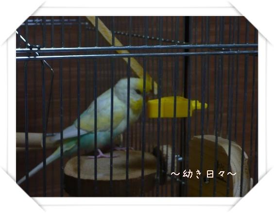 s-P1030167.jpg