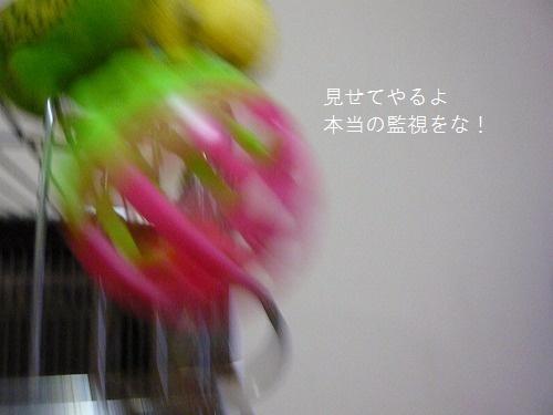 s-P1220793.jpg