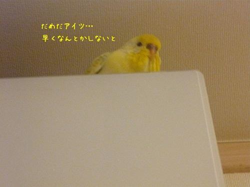 s-P1230346.jpg