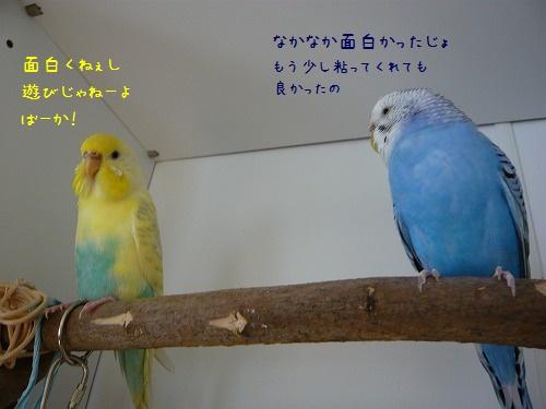 s-P1230489.jpg