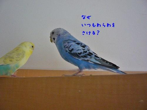 s-P1260625.jpg