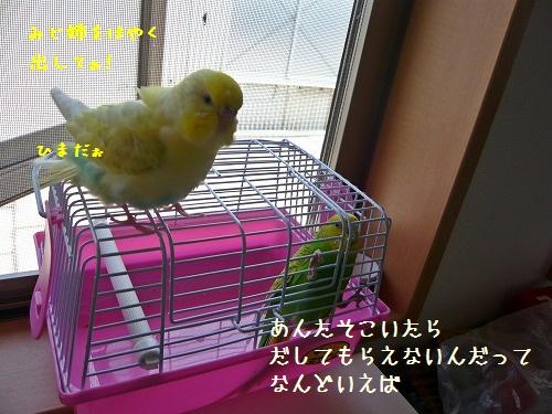 s-P1260691.jpg