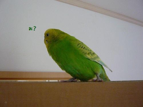 s-P1260704.jpg