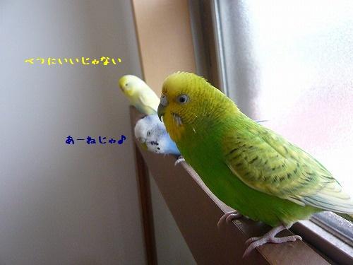 s-P1260871.jpg