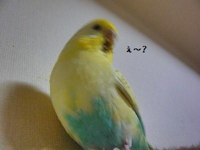 s-P1260884.jpg