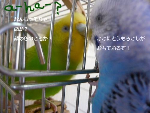 s-P1270267.jpg
