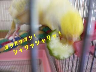 s-P1270429.jpg