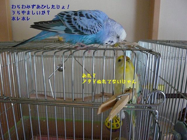 s-P1270835.jpg
