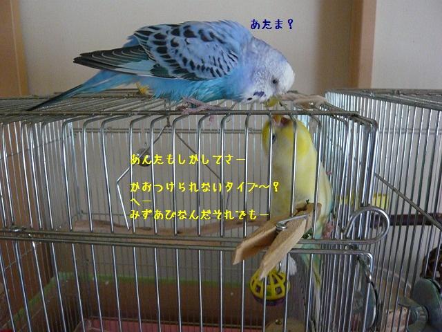 s-P1270836.jpg