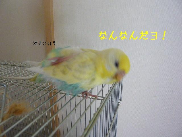 s-P1270887.jpg
