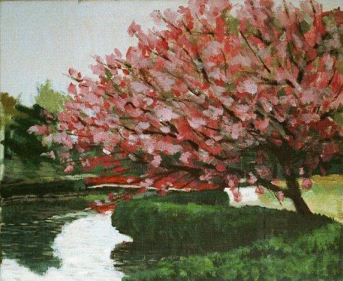 岩槻公園桜2