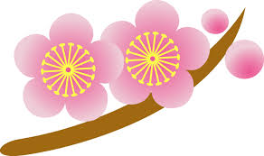images ume 1