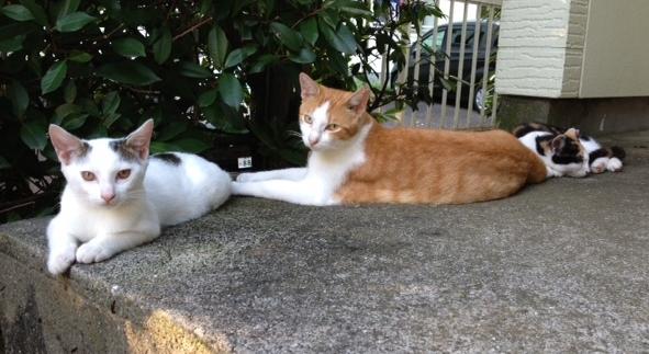 ブログ固定記事画像_1(ソレイユ猫)