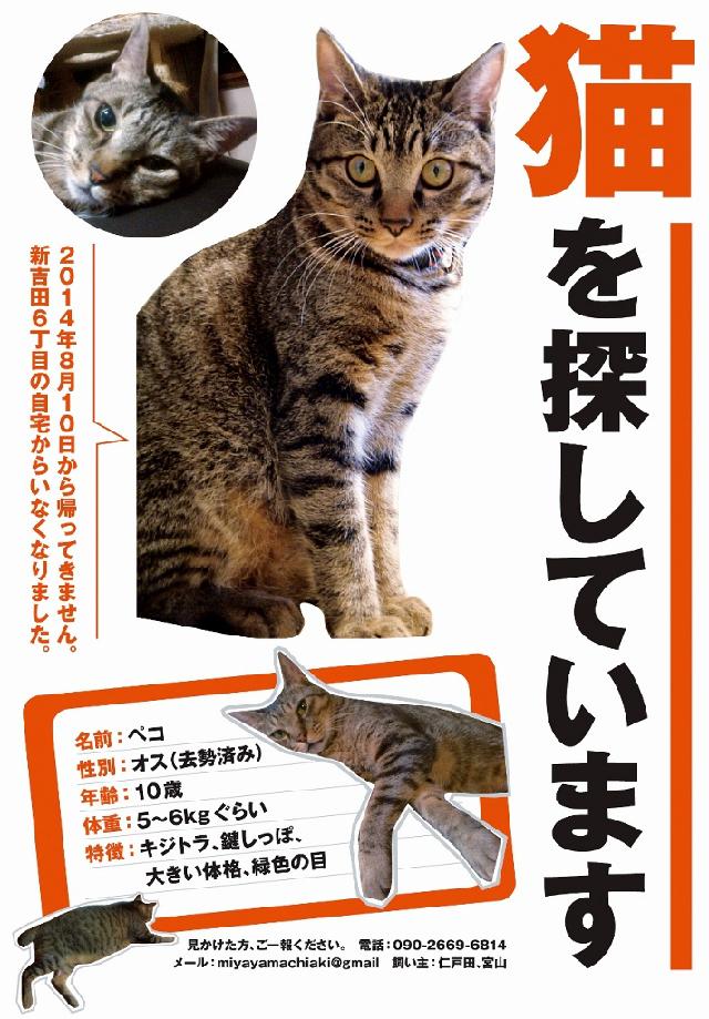 迷い猫ペコちゃん