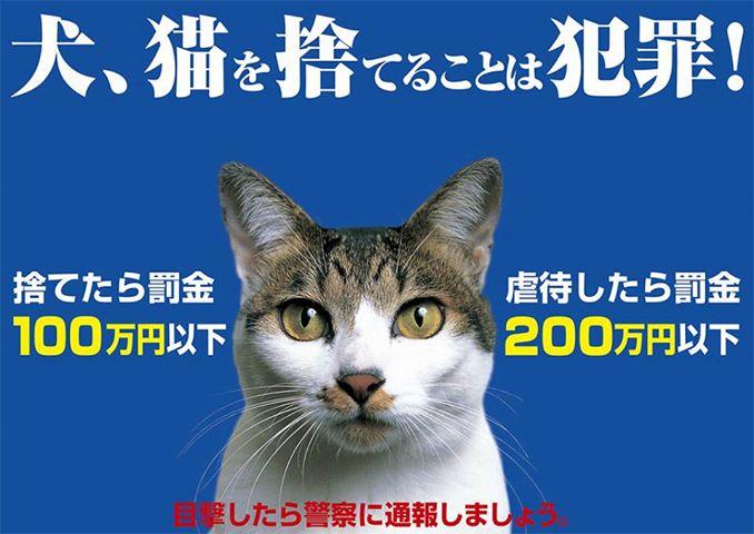 130831_neko_poster.jpg