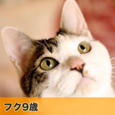MOCA013.jpg