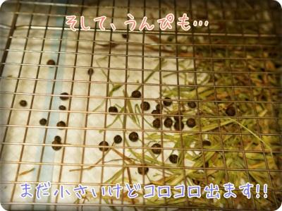 berryblo1405135.jpg