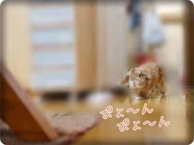 cookieblo1404186.jpg