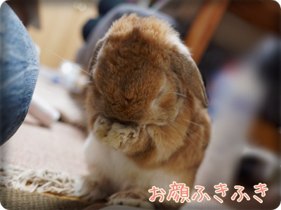 cookieblo14050212.jpg