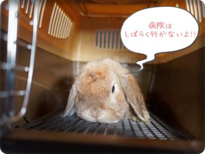 cookieblo1405025.jpg