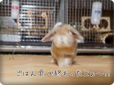 cookieblo1407041.jpg