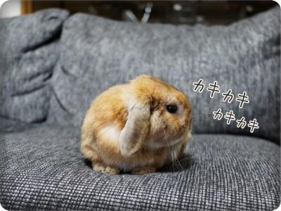 cookieblo1407043.jpg