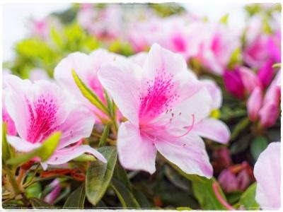 flowerblo140420.jpg