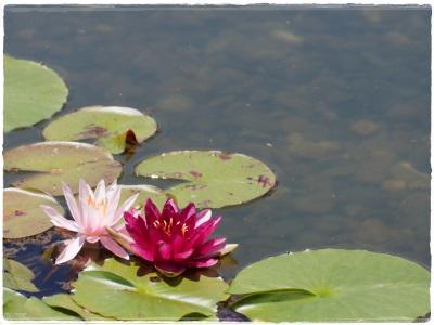 flowerblo1406162.jpg