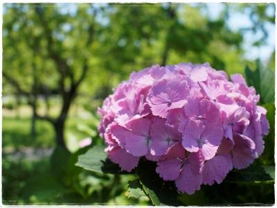 flowerblo1406163.jpg