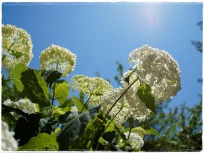 flowerblo1406164.jpg