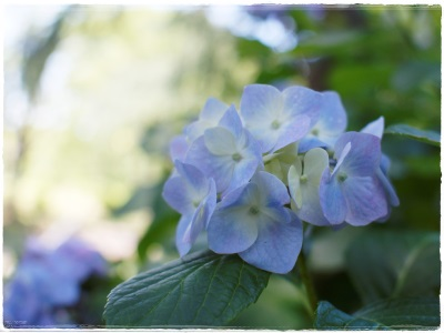 flowerblo1406165.jpg