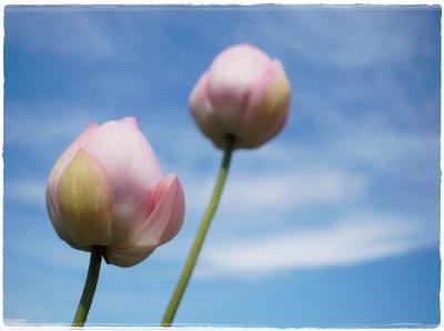 flowerblo14080410.jpg