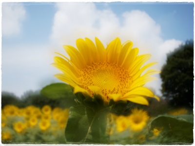 flowerblo1408042.jpg