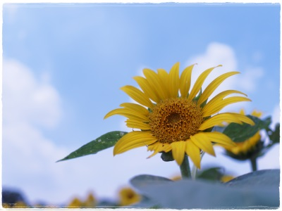 flowerblo1408043.jpg