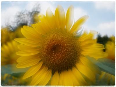 flowerblo1408044.jpg