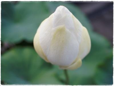 flowerblo1408047.jpg