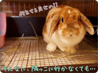 macaronblo1406072.jpg