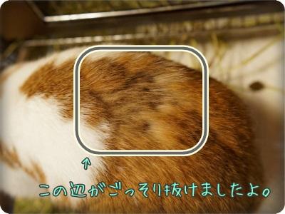 macaronblo1406075.jpg