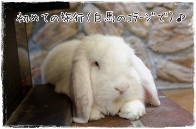 mashublo1404104.jpg