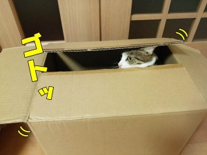 箱が・・・