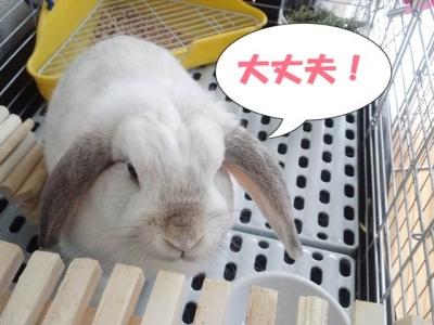 daizyoubu.jpg