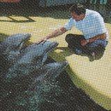 Stan Getz Dolphin-1